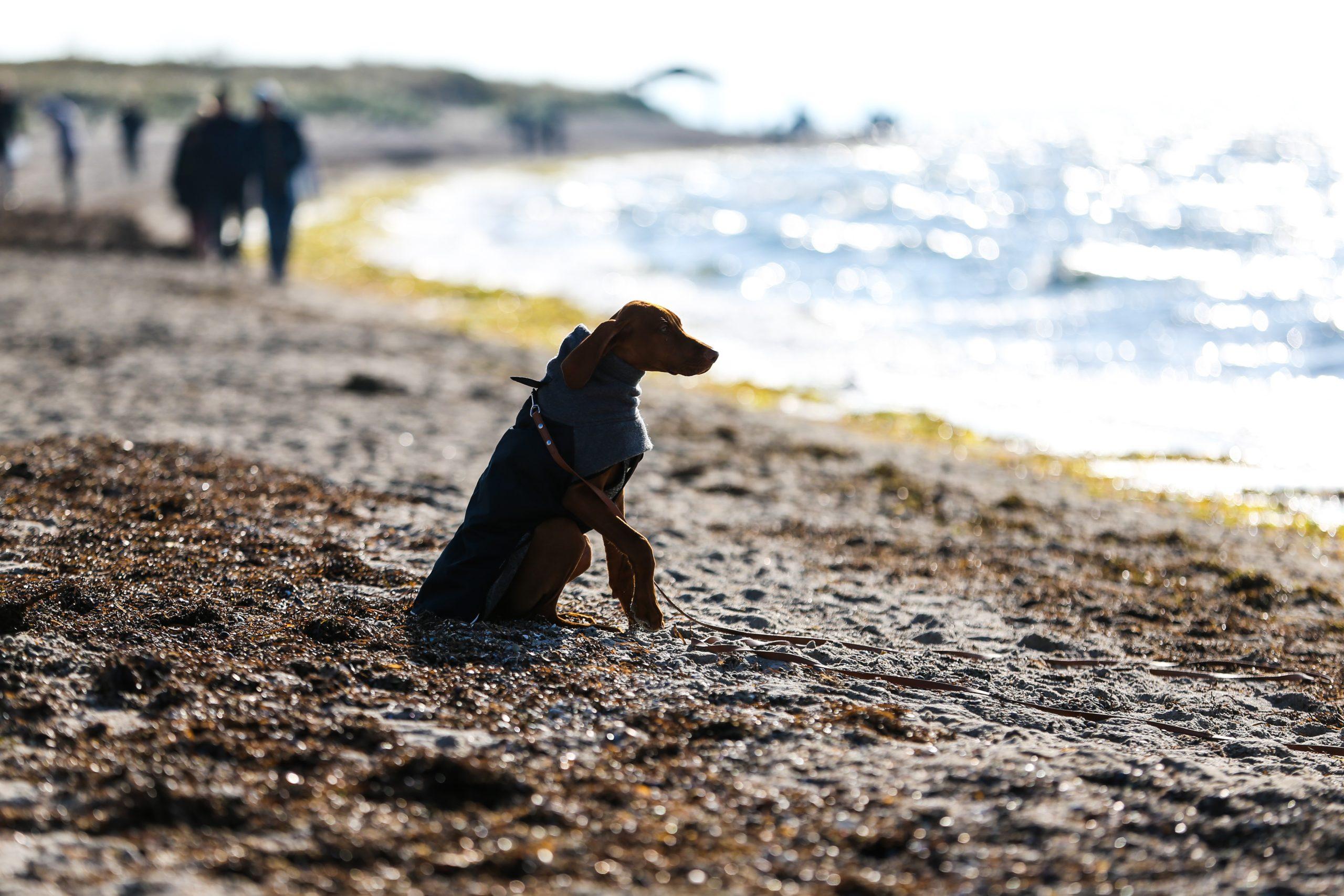 Hunde-Verbot Ostsee Strand Hundestrand