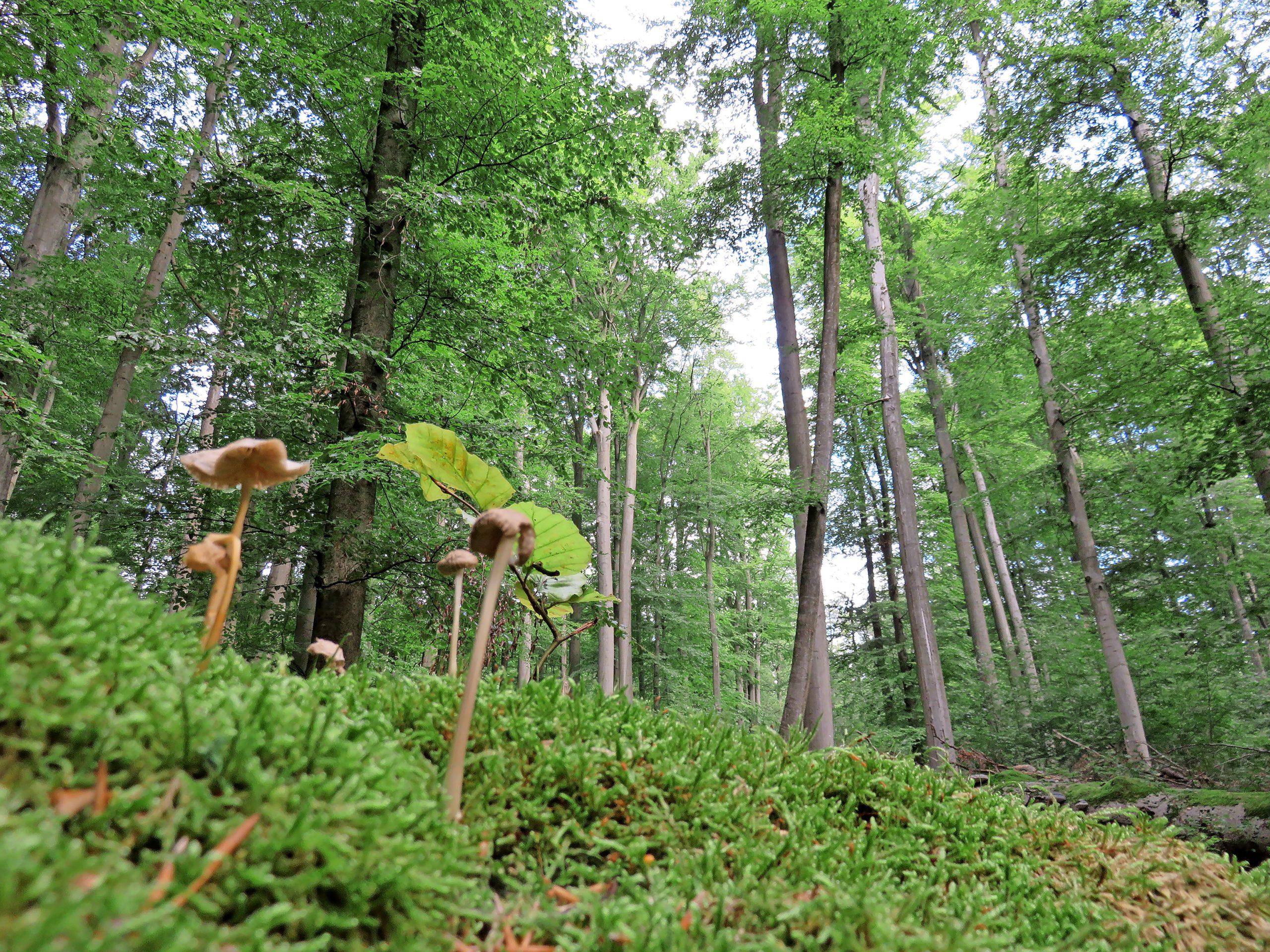 Anlässlich des internationalen Tages der Wälder forderte der BUND, mehr heimische Wälder als Naturwälder unter strengen Schutz zu stellen.