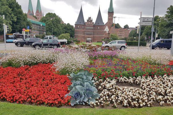In diesen Wochen ist die Komplimente-Blume mit einem Durchmesser von 22 Metern auf dem Lindenplatz in ihrer ganzen Pracht zu bewundern.