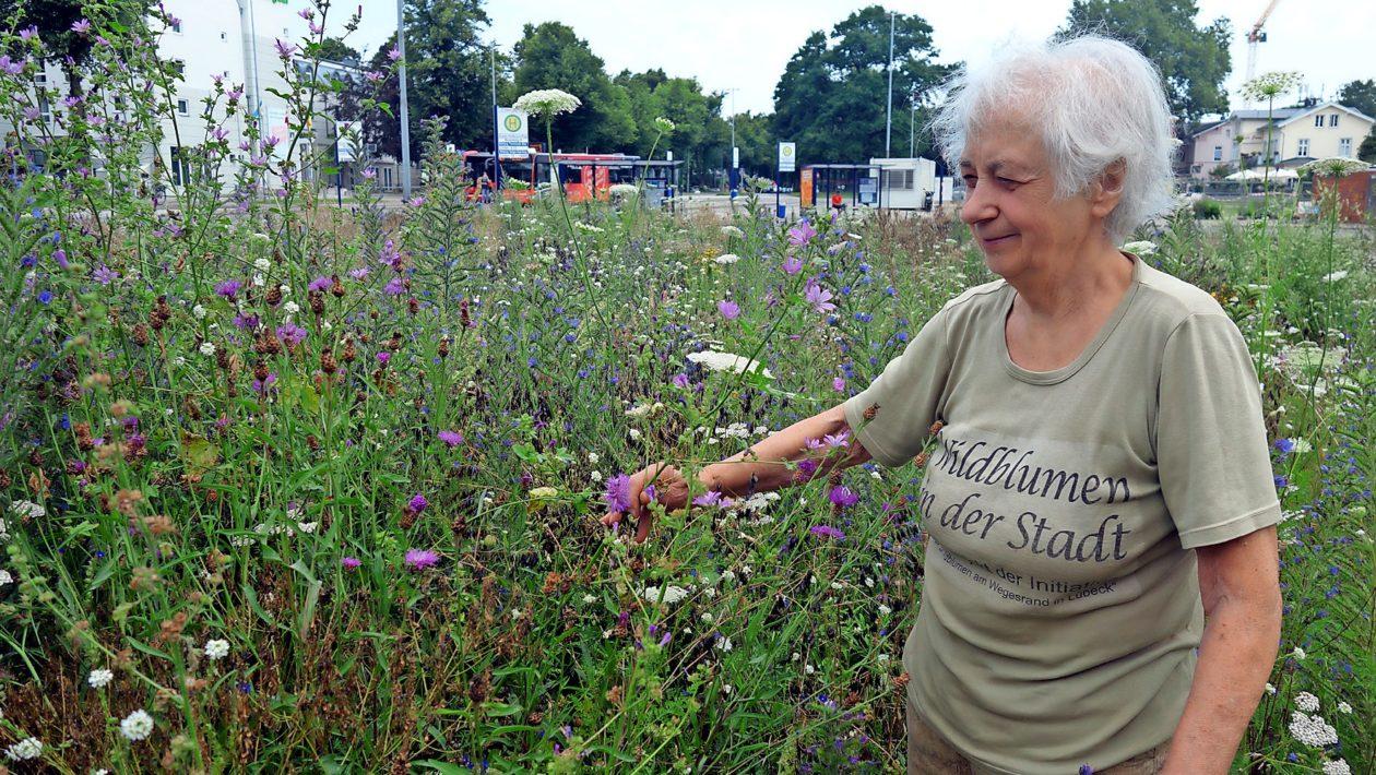 Die Wildblumenwiese am Gustav-Radbruch-Platz unterstützt Artenvielfalt und Wildbienenbestand.