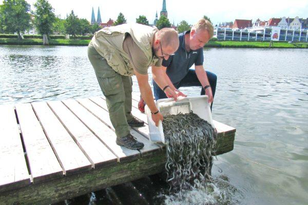 Aale Wakenitz Trave Lübeck