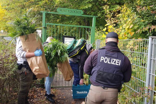Lübeck Cannabispflanzen Kleingarten