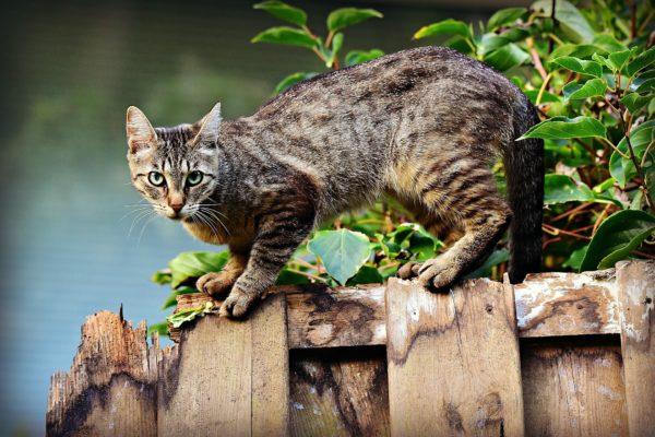 Die Kosten für die Kastration freilebender Katzen werden in voller Höhe von der Tierärztekammer Schleswig-Holstein übernommen.